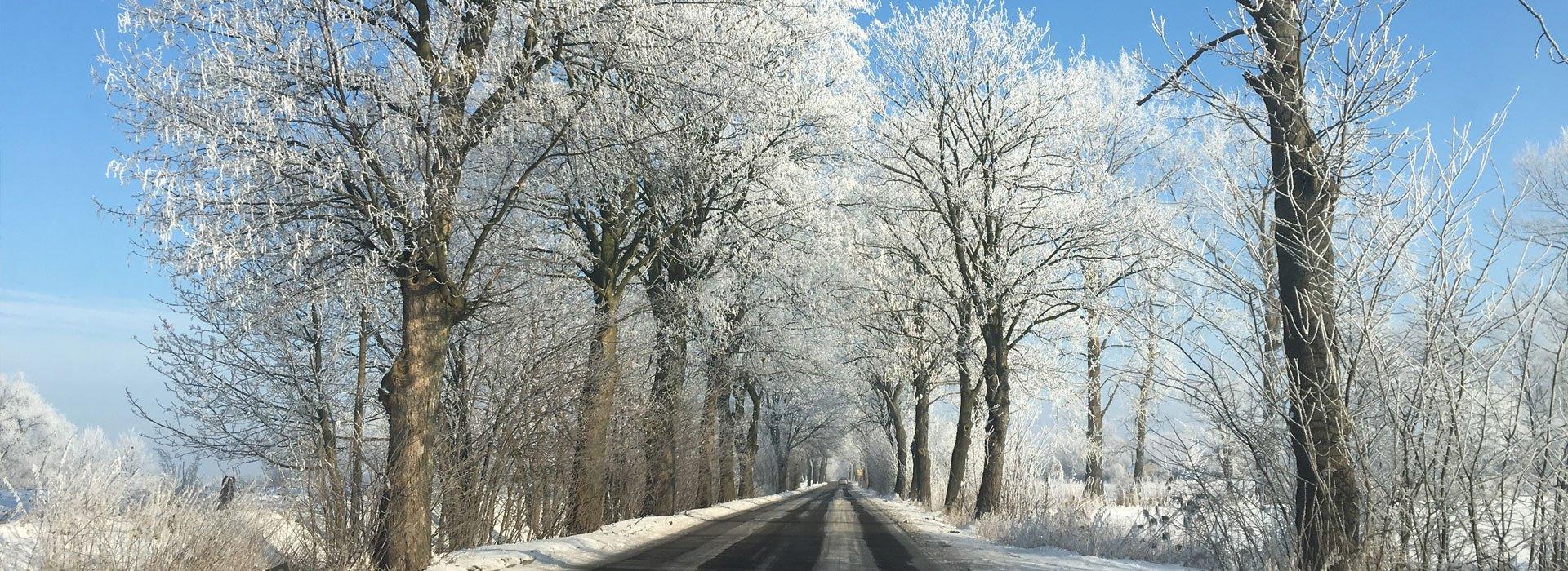 Zimowiska